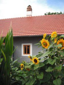 fasada-slunecnice